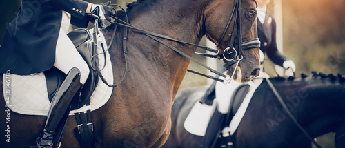 Canvastavla Equestrian sport. Dressage of horses in the arena.