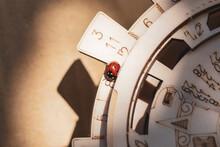 Details Of A Ladybug Walking Along A Nice Wooden Perpetual Calendar