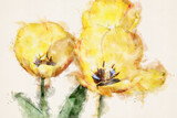 Yellow tulips in spring. Watercolor Illustration.