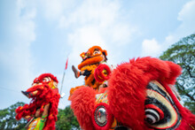 Dragon And Lion Dance Show In Chinese New Year Festival (Tet Festival ), Lion Dance - Dragon & Lion Dance Street Performances In Vietnam