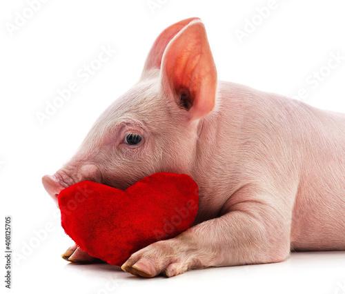 Little pink pig. © voren1