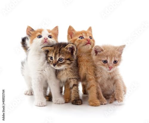 Group little kittens. © voren1