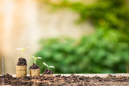 Fototapeta Small tree growing on stack of coins with natural light background (Business and