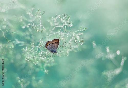 piękny motyl