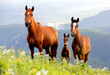 three brown horses