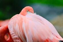 Pink Flamingo Portrait