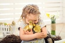 Happy Little Girl Is Played With Cute Fluffy Easter Ducklings
