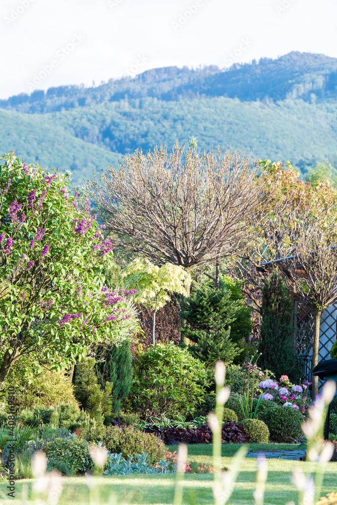 Fototapeta wiosenny ogród, piękny ogród, ogród, garden, beautiful garden, zielony ogród, nowoczesny ogród, bzy w ogrodzie
