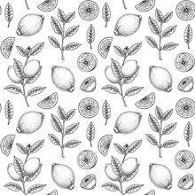 Hand Drawn Seamless Pattern With Lemon Fruit, Leaves And Branches With Flowers. Vector Illustration In Sketch Style