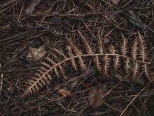 Folhas Secas No Chão Textura