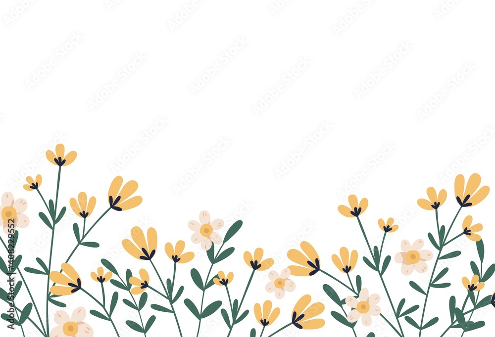 Fototapeta Horizontal botanical backdrop with border of delicate blooming yellow flowers. Floral flat vector illustration isolated on white background