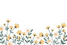 Horizontal Botanical Backdrop With Border Of Delicate Blooming Yellow Flowers. Floral Flat Vector Illustration Isolated On White Background
