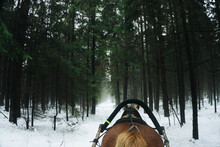 Sleigh Ride Background. Winter Horse In Forest. Sled Pull Outdoor Winter Fun. Animal Portrait Background. Fog In Forest Landscape.