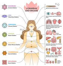 7 Chakras And Organs Explanation As Holistic Healing Basics Outline Concept