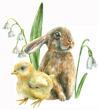 Watercolor Illustration Of A Cute Easter Bunny With A Yellow Chicken With Beautiful White Spring Flowers Lily Of The Valley And Snowdrop.