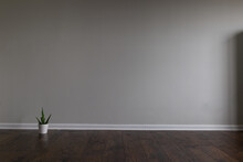 Blank Room With A Gray Wall And Laminated Floor. Small Cactus In A Pot On The Left Side Of The Image. It Can Be Used As A Realistic Background Of Virtual Furniture Or Decor.