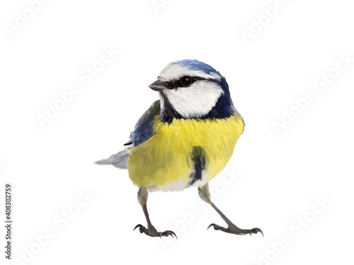 Fototapeta Blue tit bird made as oil painting and isolated on white background