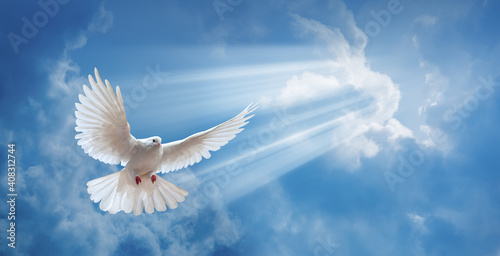 Fotografia Dove in the air with wings wide open