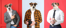 Stylish Men With Heads Of Dog On Color Background