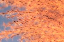 Macro Photo, Flower, Grass Background,