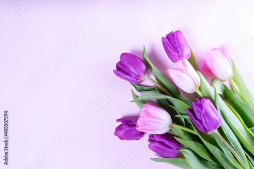 Obraz Pink blooming tulips - fototapety do salonu