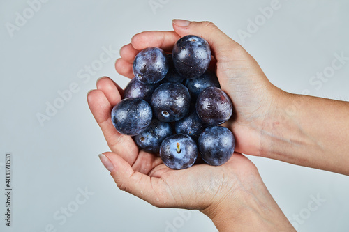 Canvas Print Hand holding fresh plums on a gray background