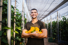 Smiling Young Farmer Carrying Fresh Yellow Bell Peppers At Organic Farm