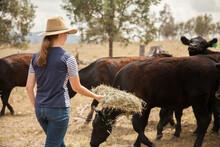 Teen Girl Feeding Hay To Livestock On A Farm