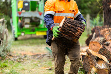 Worker Carrying A Large Tree Round Log