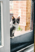 Cute Grey And White Cat In Doorway At Home