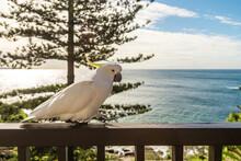 Cockatoo On Balcony At Beach House