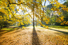 Sunlight Breaking Through Autumn Leaves In A Park