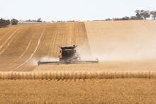 Combine Harvester Harvesting Wheat