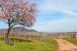 canvas print picture - Mandelbaumblüte in der Südpfalz