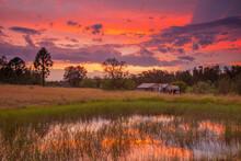 Beautiful Sunset Over Teds Hut And Dam .Sedgefield Near Singleton. Hunter Valley Of  N.S.W. Australia.