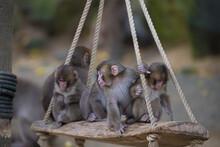 自然動物園の猿