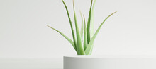 White Product Display Podium With Aloe Vera Leaf On White Background. 3D Rendering