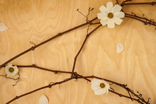 White Flowers With The Dark Vine Laying On The Wooden Background. The Concept Is Simplicity