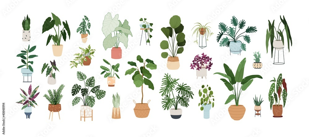 Fototapeta Set of trendy potted plants for home. Different indoor houseplants isolated on white background. Alocasia, begonia, fan palm, monstera, ficus, strelitzia and oxalis. Colored flat vector illustration