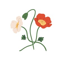 Blossomed And Unblown Buds Of Red And White Poppy Flowers On Stems. Elegant Floral Plants. Colorful Flat Vector Illustration Isolated On White Background