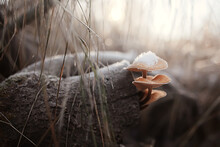 Mushrooms In The Snow, Winter View, Landscape In December Forest