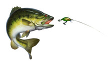 Bass Fish Jumps Out Of Water Isolate Realistic Illustration. Bass Hunts For The Golden Wobbler Bait. Perch Fishing In The Usa On A River Or Lake At The Weekend.