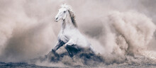 Beautiful Stallion , Horse
