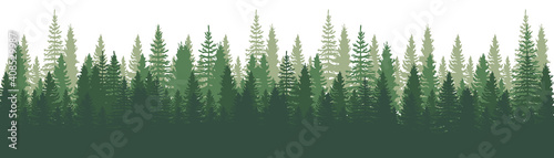 Photo Forest Panorama view