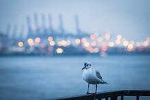 Möve Im Hafen