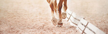 The Hooves Of A Sorrel Horse Stepping On The Sand In An Outdoor Arena Near The Dressage Barriers. Equestrian Sports. Horse Riding.