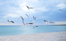 Seagulls On The Beach.