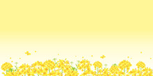 菜の花、一面黄色 菜の花畑 背景イラスト(横長 2:1比率)