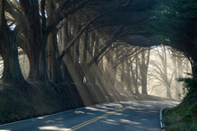 County Road With Sunlight Filtering In Through The Trees, Mendocino, California, USA | NONE |