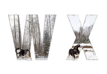 Font, Letter W, X With A Dog In The Woods